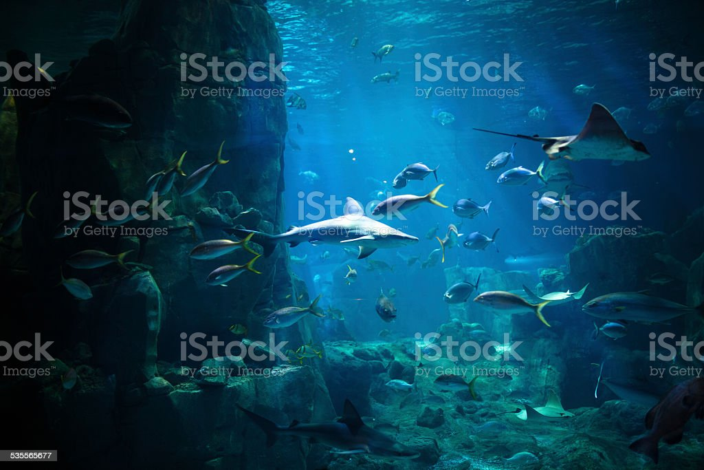 Aquarium - Photo