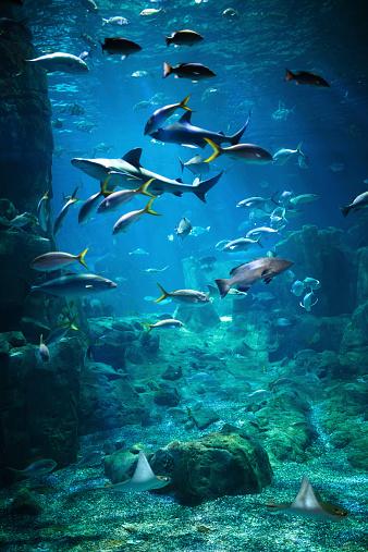 istock Aquarium 535681479