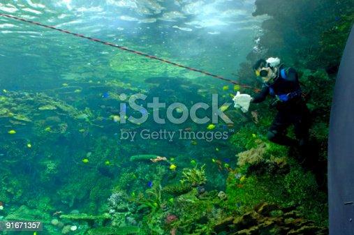 istock Aquarium - Scuba Diver 91671357
