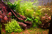 Vegetation and exotic fishes in an aquarium