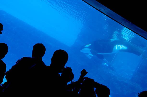 Aquarium & Silhouettes stock photo
