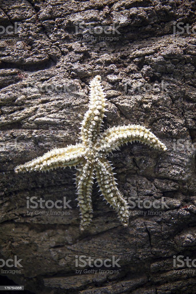 Aquarium star royalty-free stock photo