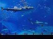 水族館のタンク