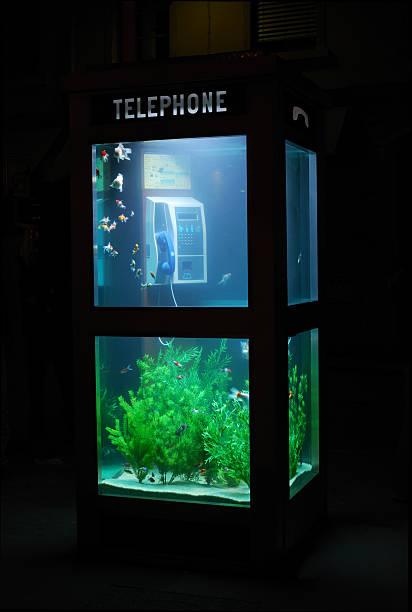 Acuario cabina de teléfono - foto de stock