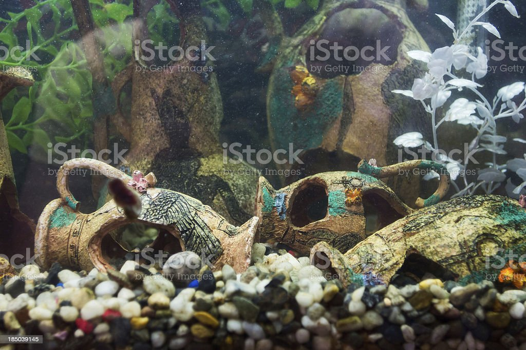 Aquarium with ancient design settlement stock photo
