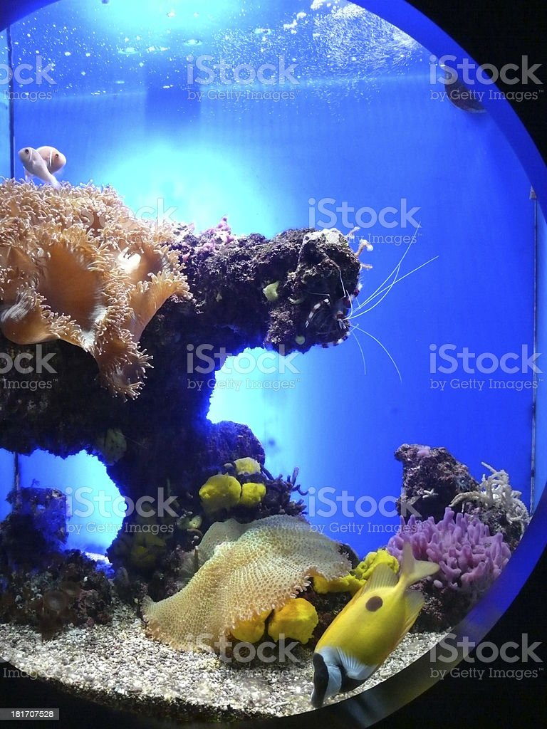 Aquarium with beautiful saltwater fishes and corals stock photo