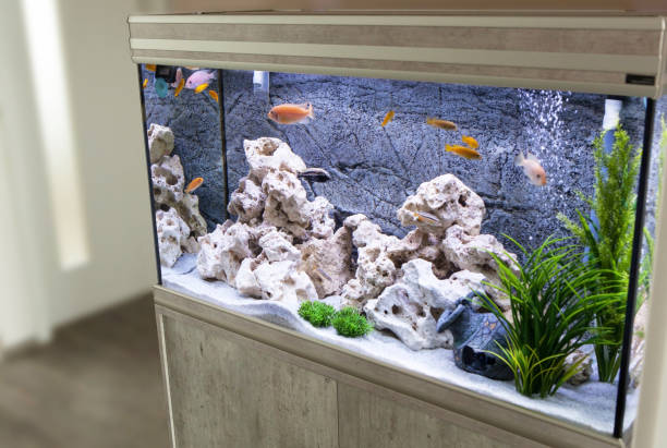 aquarium with cichlids fish from lake malawi - home aquarium stock pictures, royalty-free photos & images