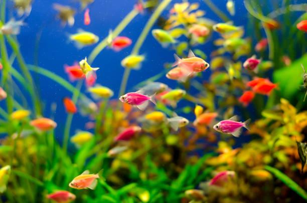 Aquarium with many colored fish stock photo