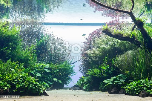 istock aquarium with water-plant and animals 614716144