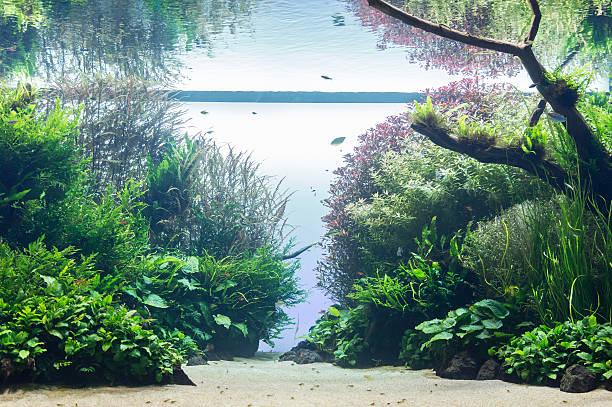 aquarium with water-plant and animals – Foto