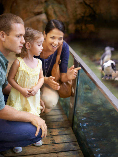 Aquariums- a paradise for kids stock photo