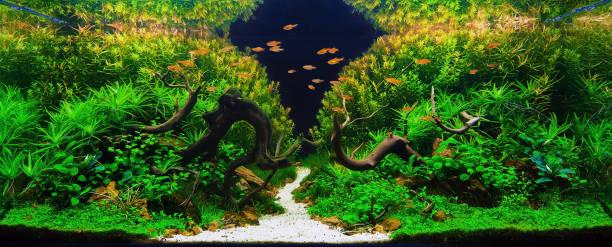 planta de aquário aquascape tanque água doce - água doce - fotografias e filmes do acervo