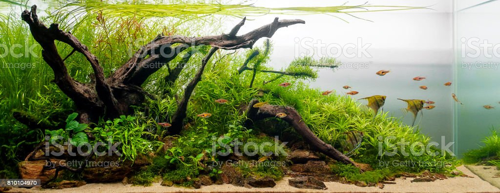 Aquascape Aquarium Plant Tank Fresh Water – zdjęcie