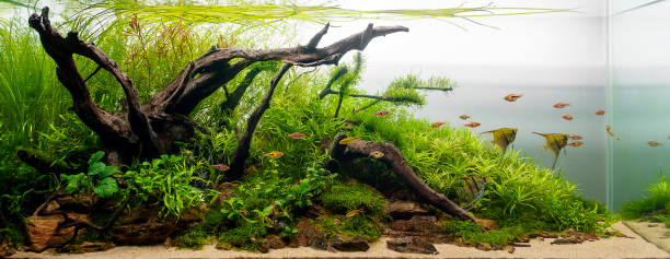 Aquascape Aquarium Plant Tank Fresh Water Aquarium Plant Tank Designe Aquascape aquarium stock pictures, royalty-free photos & images