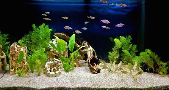 Aquascape of freshwater aquarium