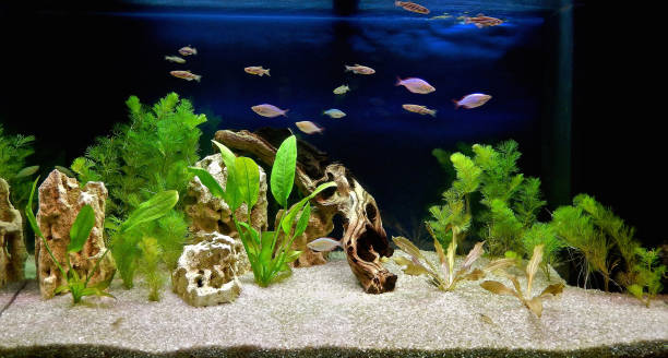 aquascape de aquário de água doce - água doce - fotografias e filmes do acervo