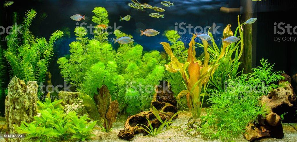Aquascape Of Freshwater Aquarium Royalty Free Stock Photo