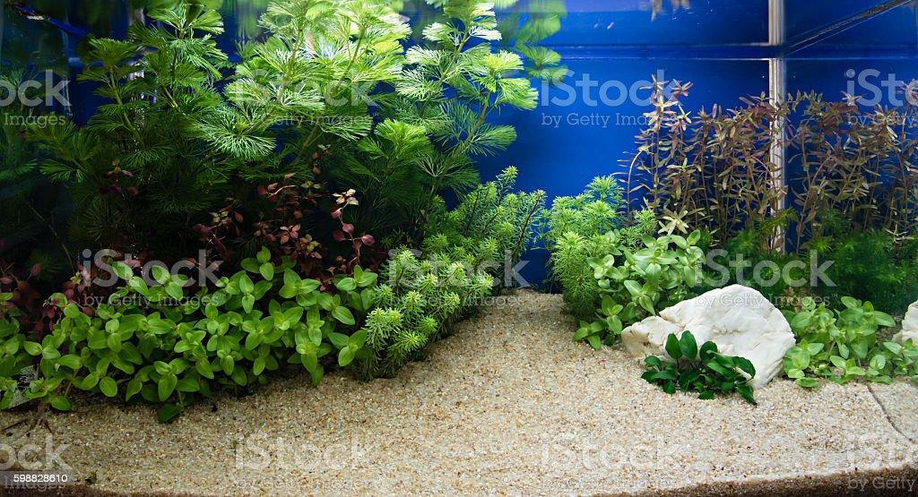 Aquascaping Of The Planted Aquarium Royalty Free Stock Photo