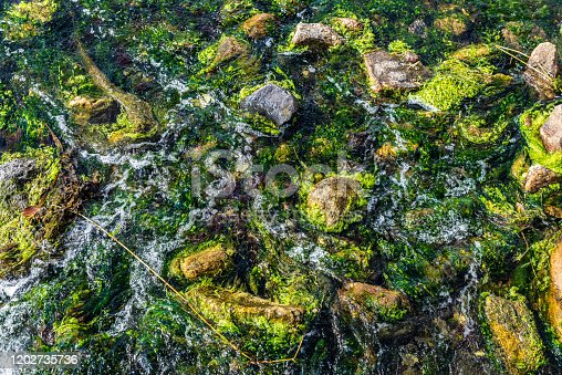 Aquatic flowers as background at the mouth of a creek in front of the Baltic Sea in Västra Hamnen, Malmo, Sweden