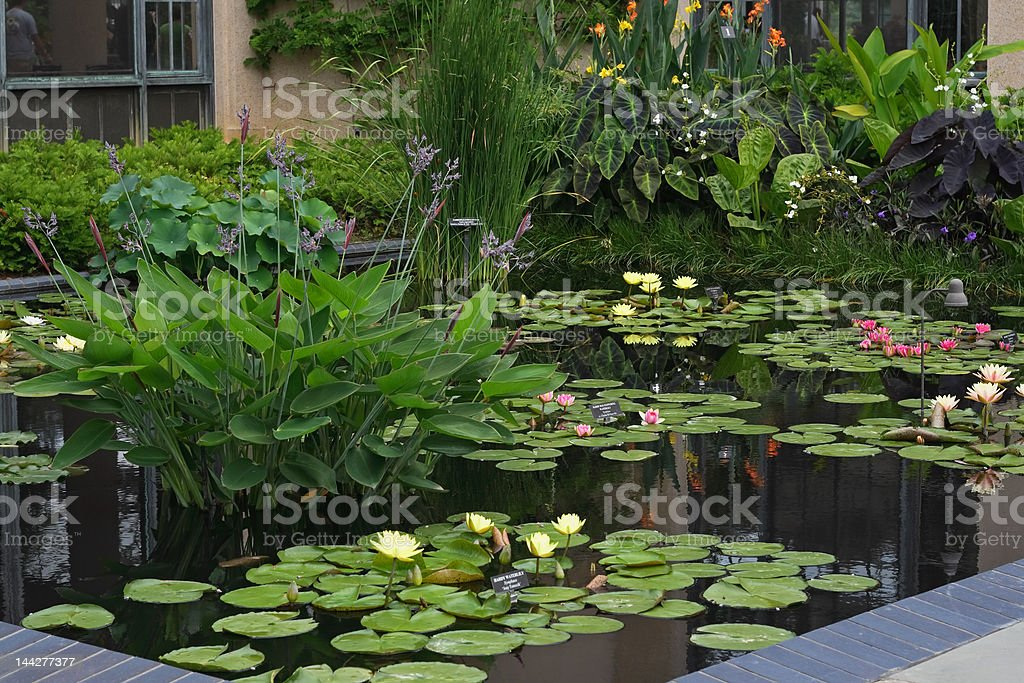 Aquatic Garden royalty-free stock photo