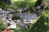 Aquatic garden in a home backyard.