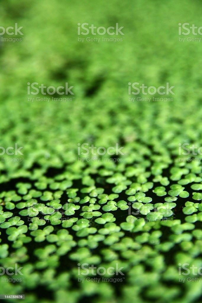 Planta aquática - foto de acervo