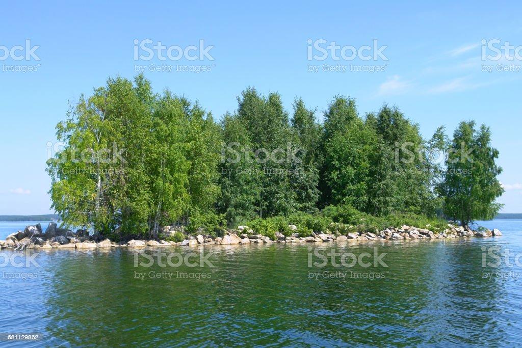 Plantes aquatiques. photo libre de droits