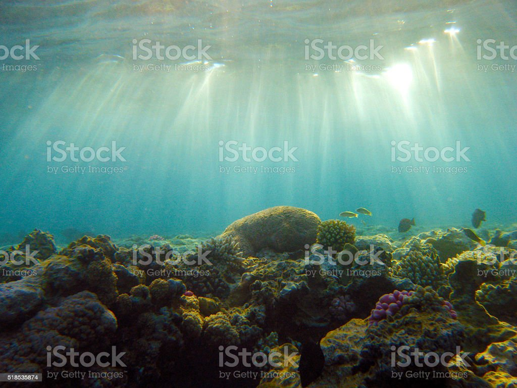 Aquatic Rays stock photo