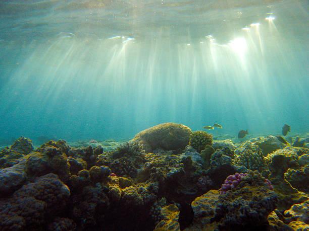 Aquatic Rays stock photo