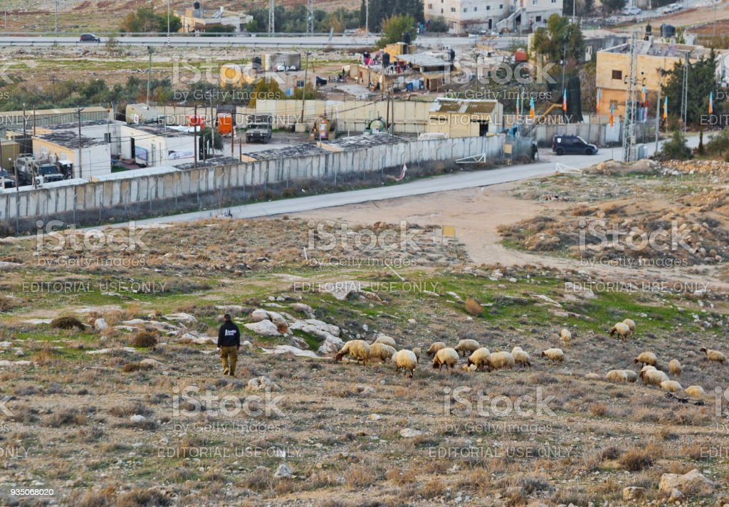 Arab guy grazes a herd of sheep near to Herodium (Herodion) Fortress stock photo
