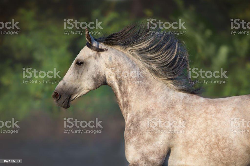 Arabian Horse Portrait Outdoor Stock Photo Download Image Now Istock