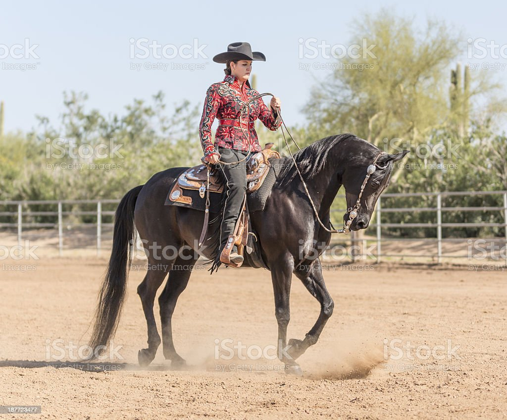 Arabian Horse with rider dressed for Show stock photo