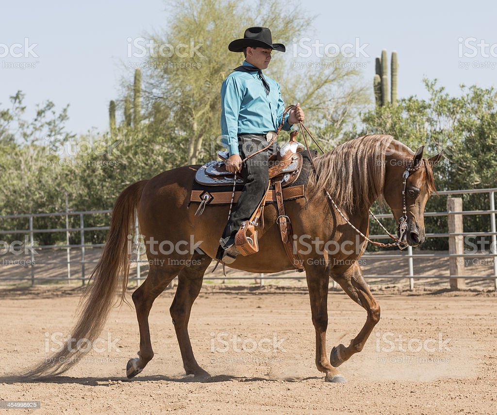 Arabian Horse with young man riding stock photo
