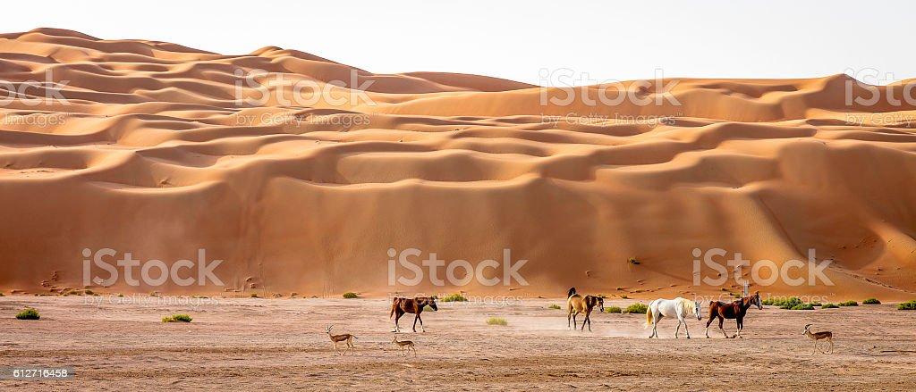 Arabian Horses and Gazelles stock photo