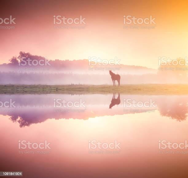 Photo of Arabian horses grazing on pasture at sundown in orange sunny beams.