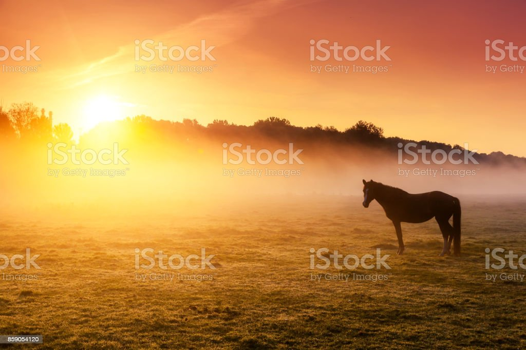 Arabian horses grazing on pasture at sundown in orange sunny beams. stock photo