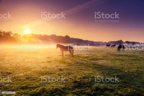 Arabian horses grazing on pasture at sundown in orange sunny beams picture id927539546?b=1&k=6&m=927539546&s=612x612&h=2pdjq3ulrjyfnxqj5sluhxdsfafwbja4qa8aty167b4=
