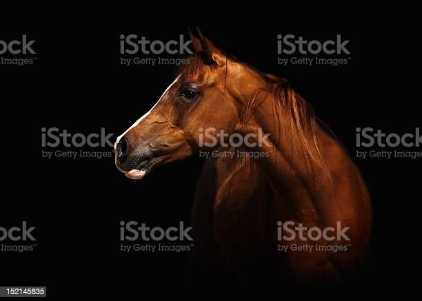 Arabian mare picture id152145835?b=1&k=6&m=152145835&s=612x612&h=ux3hiwuewysh ueeguzcebjj1c5phv5mvn skepfweg=