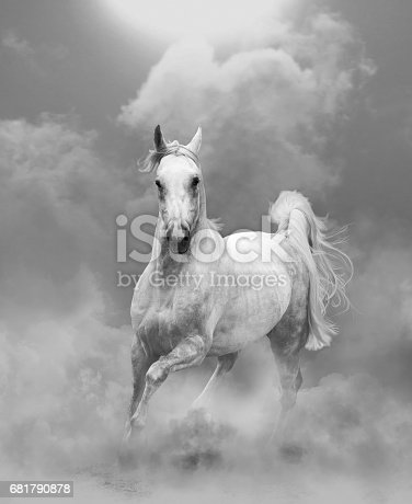white arabian stallion running in dust in monocrhome tones