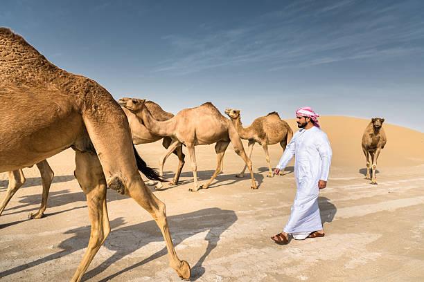arabic sheik on the desert walking with the camel - oman стоковые фото и изображения