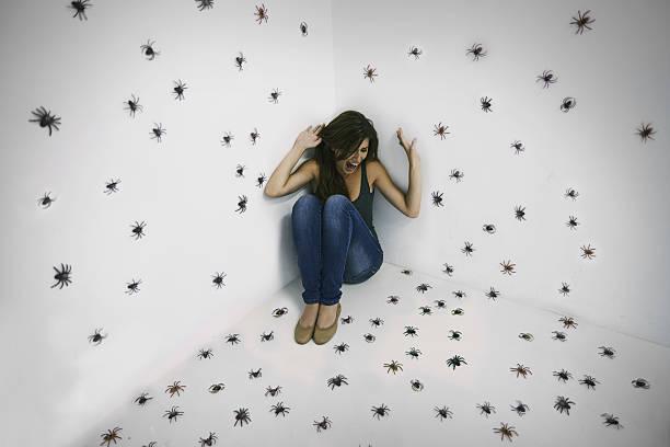 arachnophobic le pire cauchemar réalité ! - araignée photos et images de collection