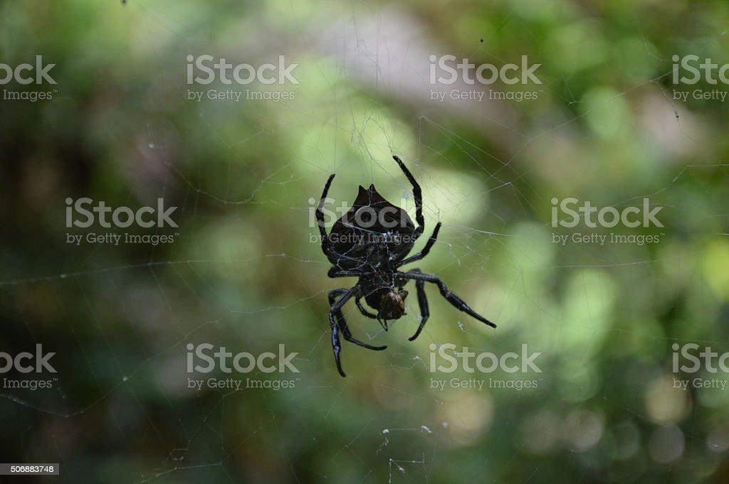 Araignée sauvage stock photo