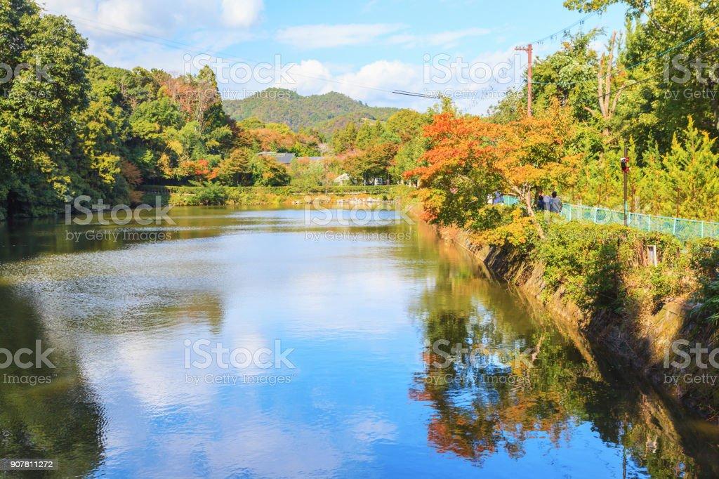 Arashiyama bamboo forest against blue sky background, Kyoto - foto stock