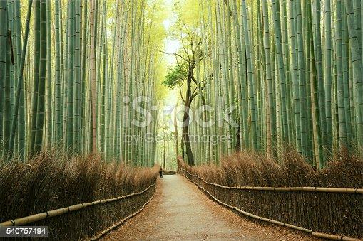 istock Arashiyama Bamboo Forest in Kyoto, Japan 540757494
