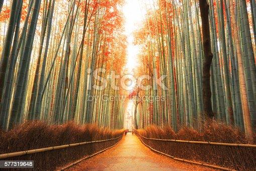 istock Arashiyama Bamboo Forest in Kyoto, Japan 577319648