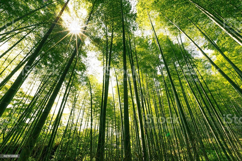 Arashiyama Bamboo Forest, Kyoto, Japan stock photo