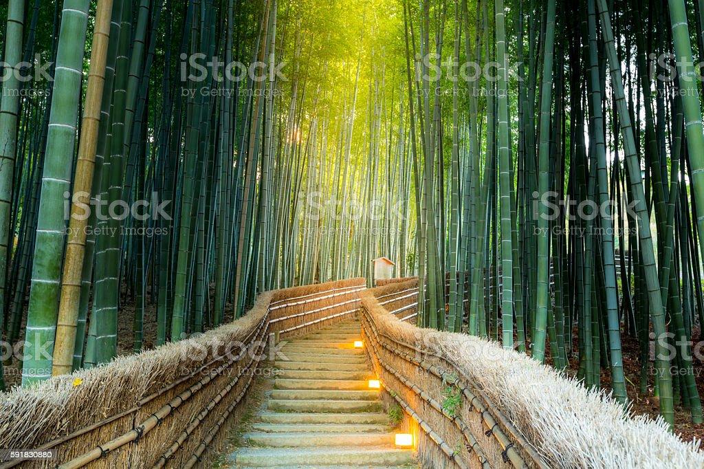 Arashiyama Foresta di bambù - foto stock