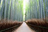 Arashiyama Bamboo Forest, Kyoto Prefecture, Japan