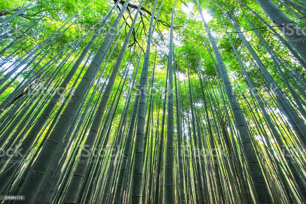 Arashiyama Bamboo Grove, a Kyoto, Giappone. - foto stock