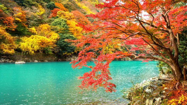 Arashiyama in autumn season along the river in Kyoto, Japan. stock photo